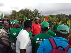 """Résultat de recherche d'images pour """"Guadeloupe Travailleurs de la banane Images"""""""